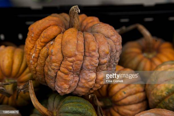 mini fairytale pumpkin from france - ugly pumpkins stock photos and pictures