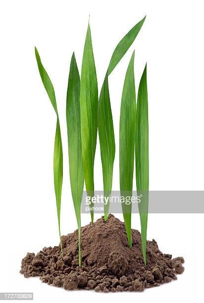 Mini pelouse