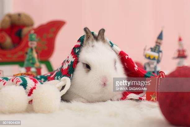 mini rabbit - candy dolls fotografías e imágenes de stock