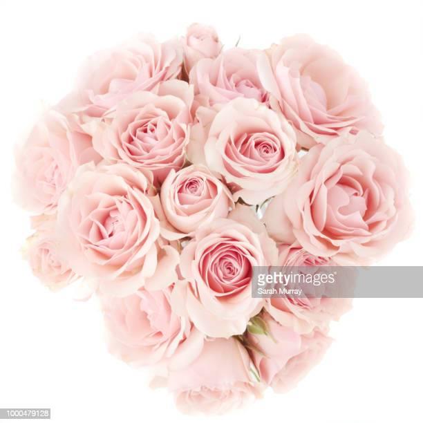 mini roses - rosa stock-fotos und bilder