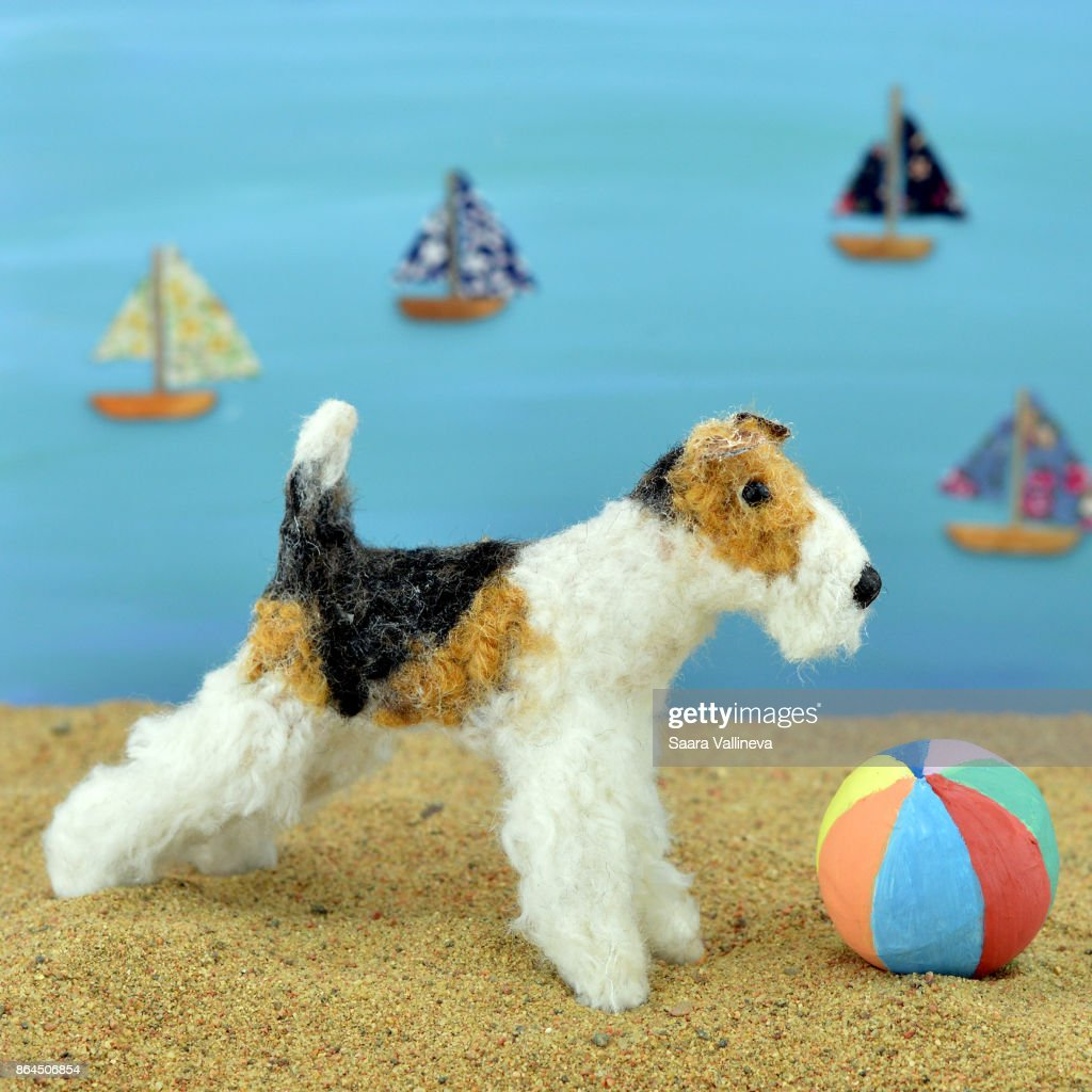 Miniature Fox Terrier On A Beach Stock Photo | Getty Images