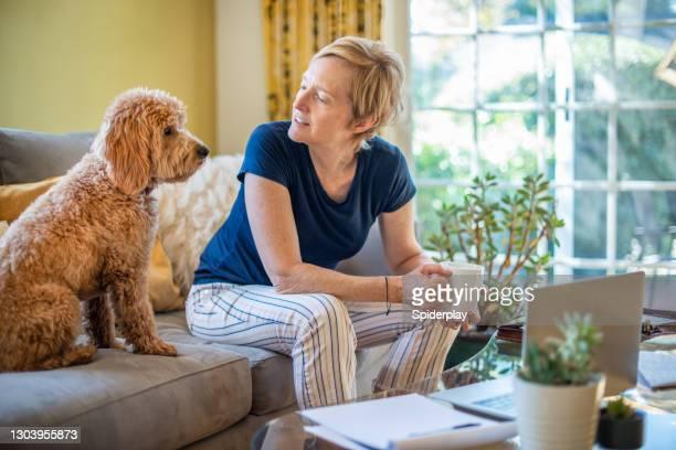 彼の所有者の隣のソファに座っているミニチュアゴールデン落書き - 1 minute 50 ストックフォトと画像