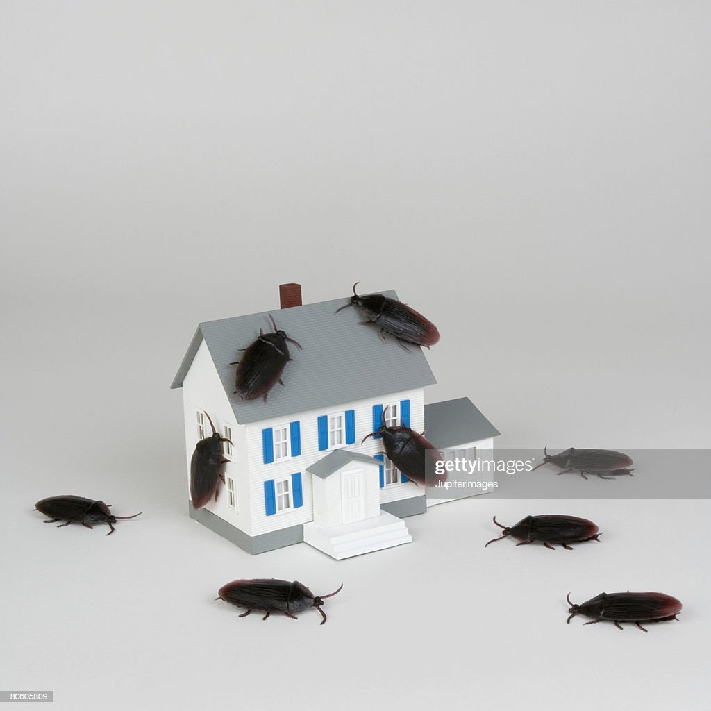 Miniature house and cockroaches : Stock Photo