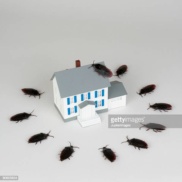 miniature house and cockroaches - pest stock photos and pictures