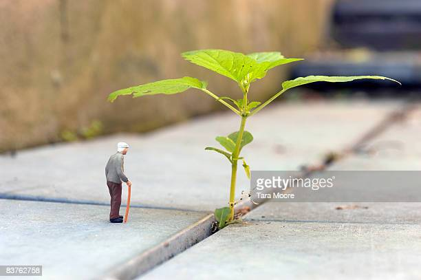 miniature old man looking a sprouting plant