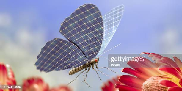 miniature robotic butterfly with solar panel wings flies near flower - innovation stock pictures, royalty-free photos & images