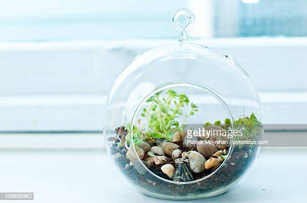 Terrarium Stock Pictures Royalty Free Photos Images Getty Images