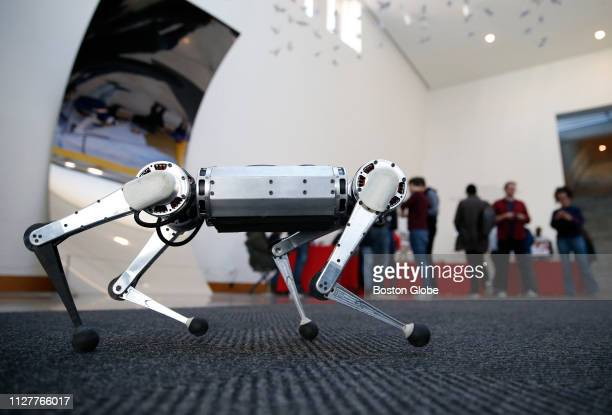 MiniCheetah robot is on display at the Massachusetts Institute of Technology in Cambridge MA on Feb 26 2019 The school held a threeday celebration of...