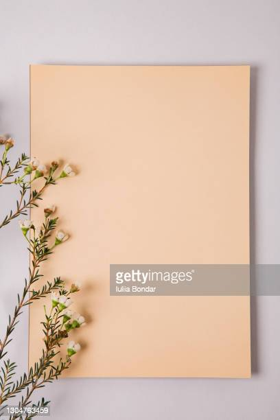minimal composition with a beige blank and a wax flower on a white background. - mail stock pictures, royalty-free photos & images