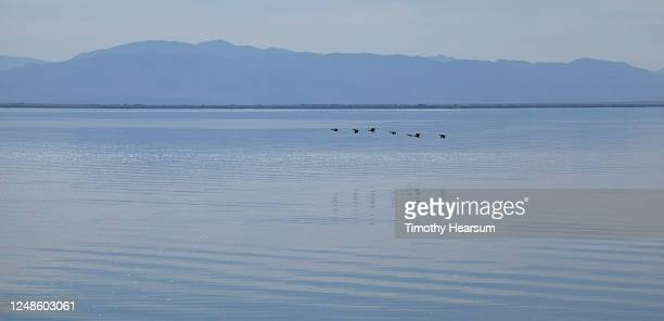 minimal image with seven ducks flying just above the salton sea; their reflections are on the water, mountains and sky in the distance - timothy hearsum stock pictures, royalty-free photos & images