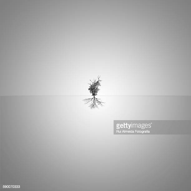 Minimalism tree reflection