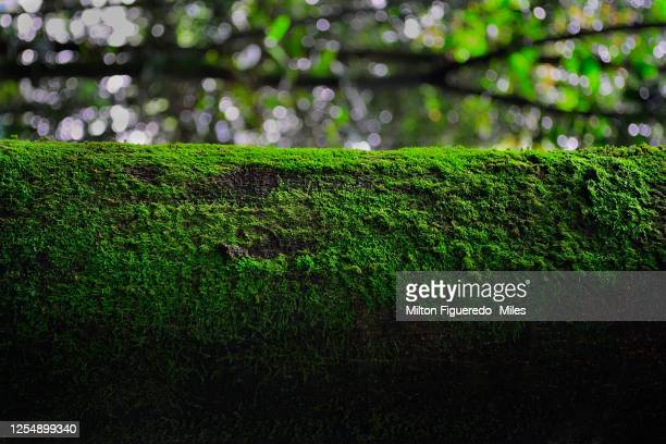 minimalismo natural - cundinamarca stock pictures, royalty-free photos & images