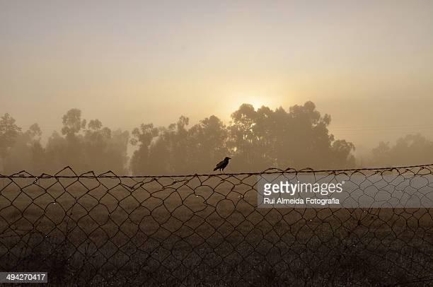 Minimalist bird silhouette