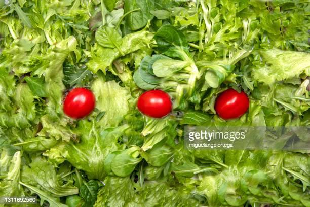 minimalist salat - lettuce and tomato - miguelangelortega fotografías e imágenes de stock