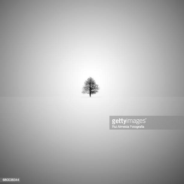 Minimalist tree in black and white illustration and art print