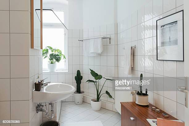 minimalist white bathroom - toilet planter stock pictures, royalty-free photos & images