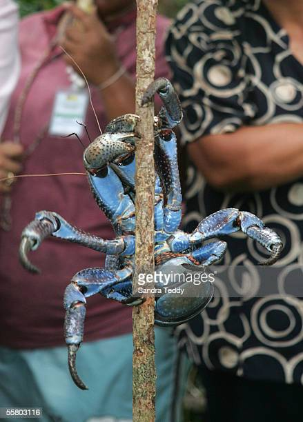 Minister, Mahara Okeroa holds a coconut crab as Georgina Te Heuheu , his wife, Kaye and New Zealand Prime minister, Helen Clark look on during their...