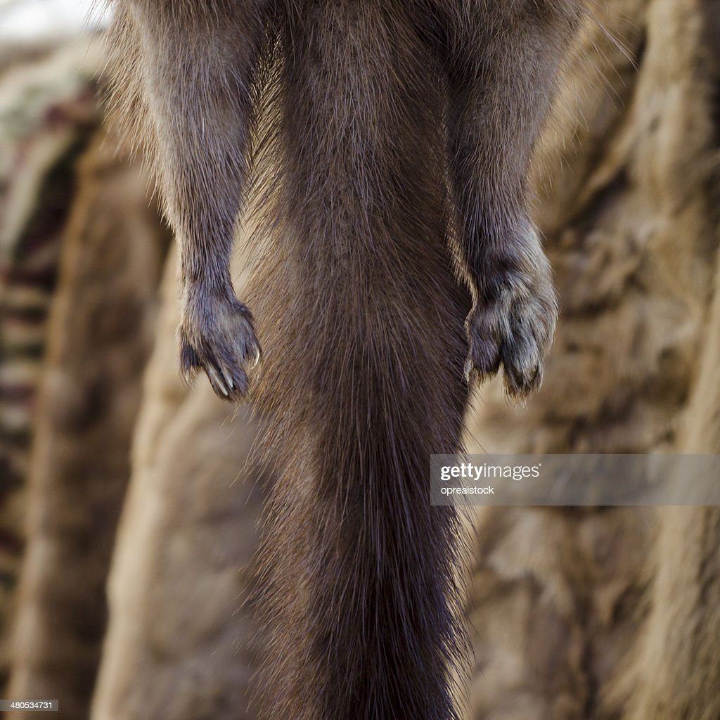 mink fur : Stock Photo