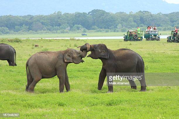 Minneriya National Park is a national park in North Central Province of Sri Lanka. The area was designated as a national park on 12 August 1997,...