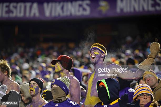 Minnesota Vikings fans in the stands without shirts scream against the New York Giants on December 27 2015 at TCF Bank Stadium in Minneapolis...