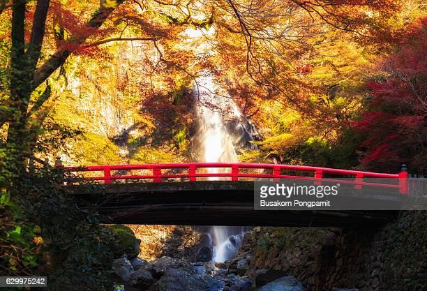 minoh waterfall in autumn season, osaka japan, beautiful waterfall in osaka japan - 伝統 ストックフォトと画像