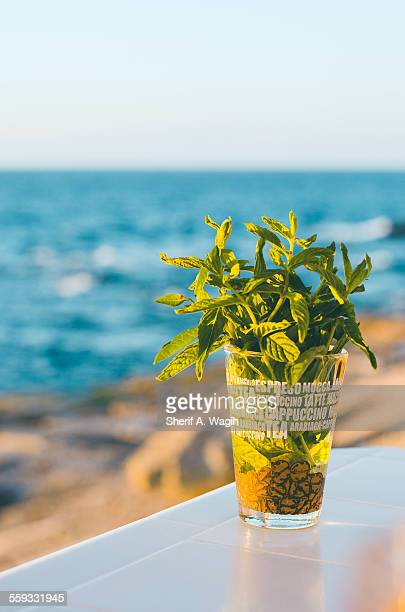 Mint by the sea
