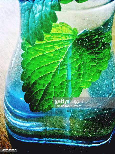 Mint Leaf In Drinking Glass