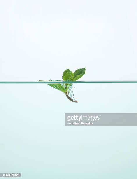 mint leaf in water - mint leaf culinary stock pictures, royalty-free photos & images