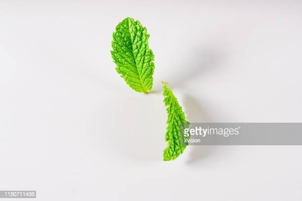 mint leaf on white background jump in mid air captured with high speed with white background studio shot - mint green stock pictures, royalty-free photos & images