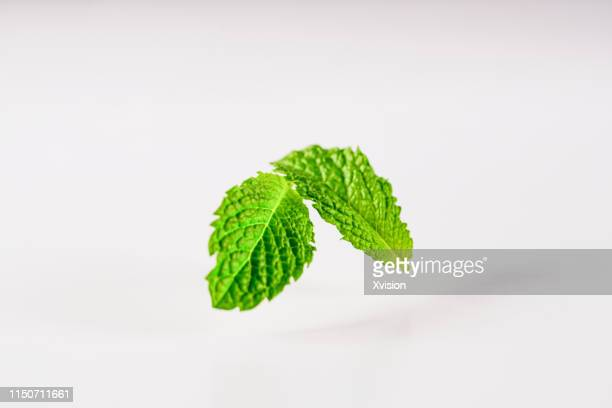 mint leaf on white background jump in mid air captured with high speed with white background studio shot - ミント ストックフォトと画像