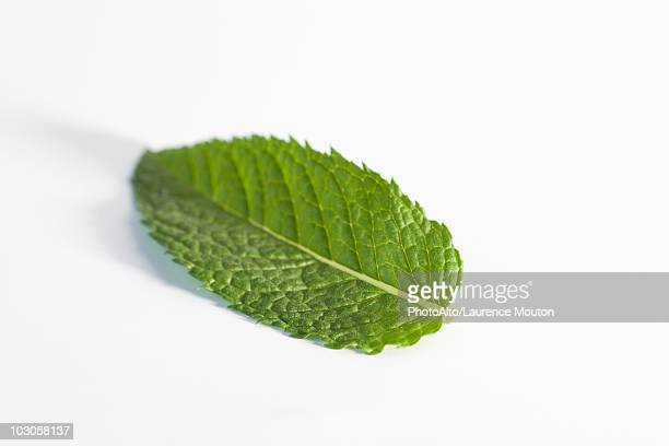 mint leaf - mint leaf stock photos and pictures