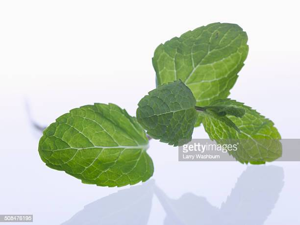 Mint leaves against white background