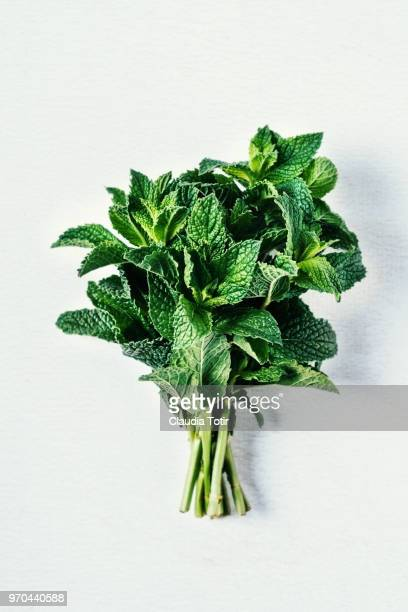 mint - mint leaf stock photos and pictures