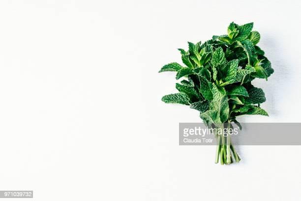 mint - erbe aromatiche foto e immagini stock