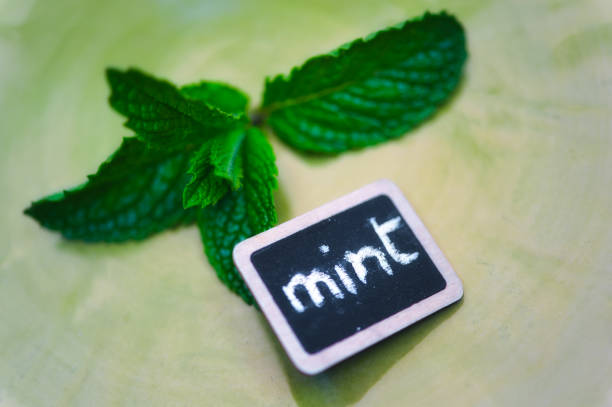 Mint Sprig And Slate Label With Mint Writing Wall Art