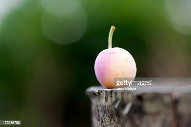 Mirabelle plum auf Baumstumpf