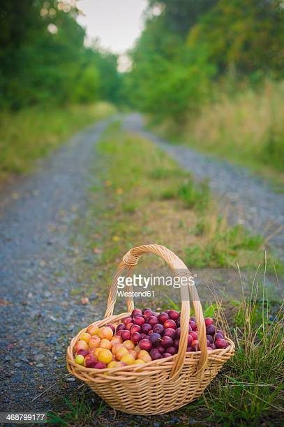 Mirabelles in a basket