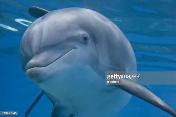 mirage dolphin - イルカ ストックフォトと画像