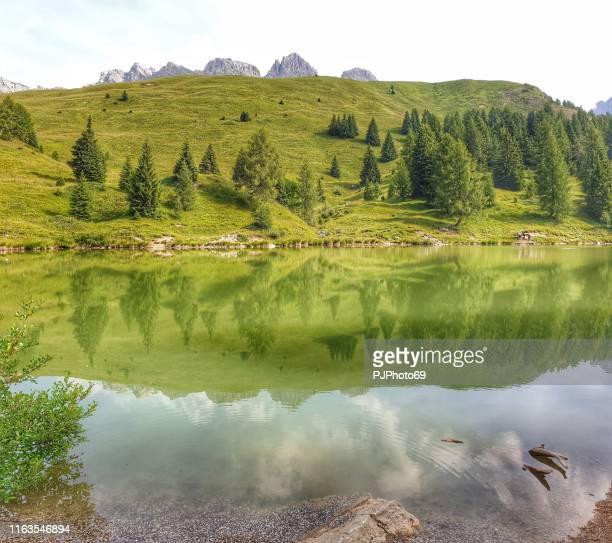 miralago's lake - passo san pellegrino - dolomitea - pjphoto69 stock pictures, royalty-free photos & images