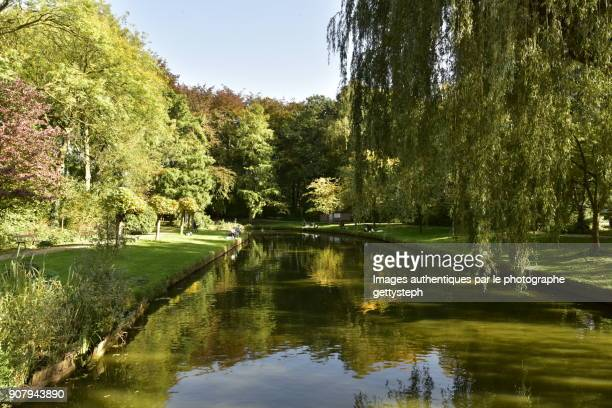 mirror effect in main water channel in autumn - mechelen stock pictures, royalty-free photos & images