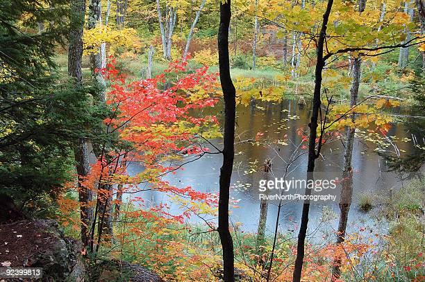 鏡湖の秋 - ポーキュパイン山脈ウィルダネス州立公園 ストックフォトと画像