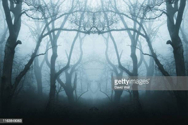 a mirrored, duplicate effect of a spooky, eerie forest in winter, with the trees silhouetted by fog. with a muted, blue edit. - woodland stock pictures, royalty-free photos & images