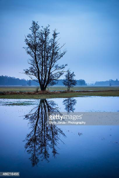 mirrored - boris stock photos and pictures