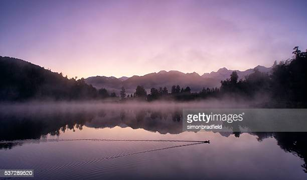 mirror-like lake matheson in new zealand - duck bird stock photos and pictures