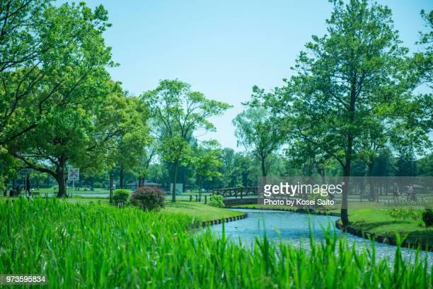 misato park - saitama prefecture stock pictures, royalty-free photos & images