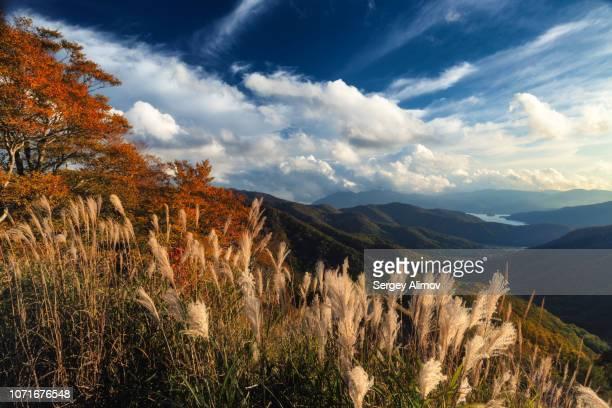 miscanthus grass and valley sides of hibara lake before sunset - flanco de valle fotografías e imágenes de stock