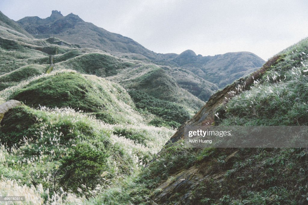 Miscanthus valley of Jinguashi : Stock Photo