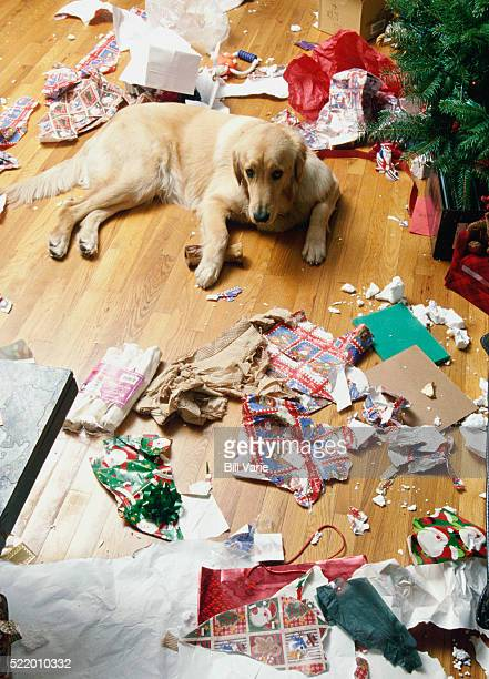 mischievous dog - christmas dog stock pictures, royalty-free photos & images