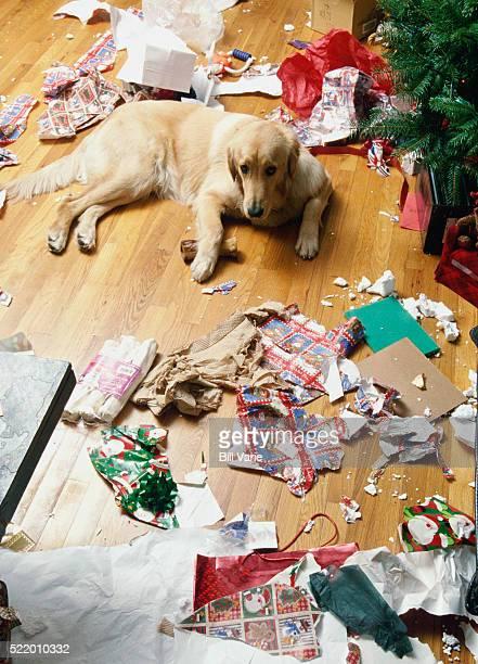 mischievous dog - sapin de noel humour photos et images de collection