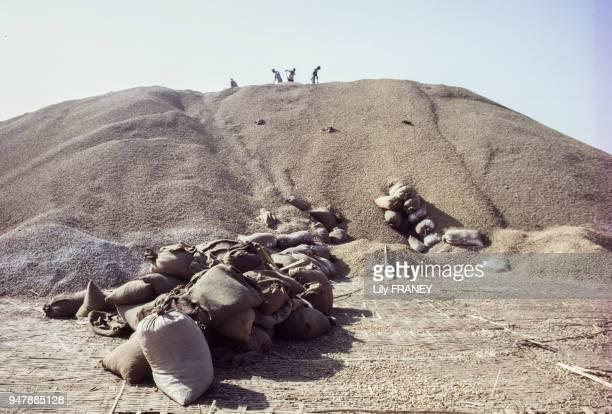 Mise en sac de la récolte d'arachides au Sénégal, en avril 1987.